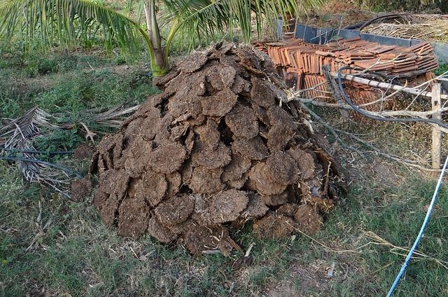 fertilizing with manure